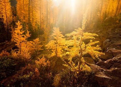Backpacking Photograph - Larch Light by Thorsten Scheuermann