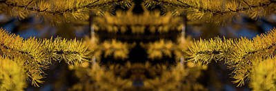 Surrealism Digital Art Rights Managed Images - Larch Needles Reflection Royalty-Free Image by Pelo Blanco Photo