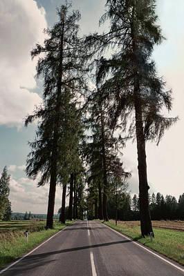 Photograph - Larch Tree Lined Avenue Heidenreichstein Waldviertel Austria by Menega Sabidussi