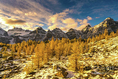 Photograph - Larch Valley Golden Larches Touch Of Winter by Mike Reid