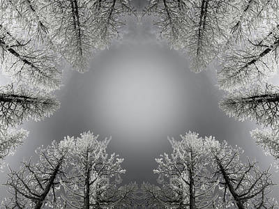 Larches Reflection Black And White Art Print