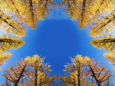 Royalty-Free and Rights-Managed Images - Larches Reflection by Pelo Blanco Photo