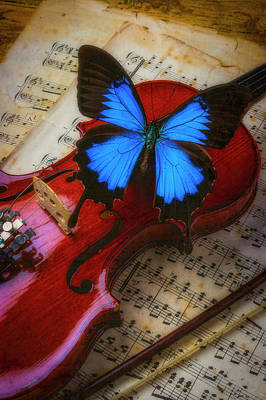 Fiddle Wall Art - Photograph - Large Blue Butterly On Violin by Garry Gay