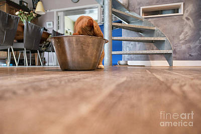 Photograph - Large Bowl And Cat by Patricia Hofmeester