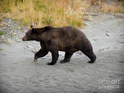 Grizzly Bear Photograph - Large Brown Bear by Dora Miller