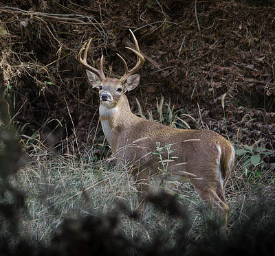Photograph - Large Buck by John Johnson