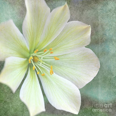 Large Flower Art Print