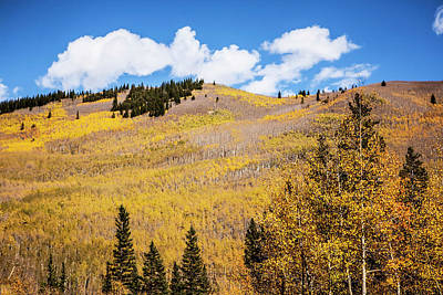 Photograph - Large Hill Of Aspen Trees In Fall by Marilyn Hunt