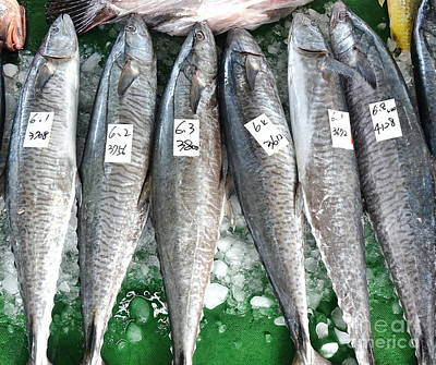 Photograph - Large Indo-pacific King Mackerels by Yali Shi
