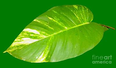 Digital Art - Large Leaf Art by Francesca Mackenney