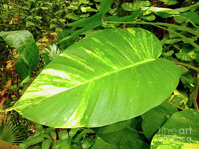 Photograph - Large Leaf by Francesca Mackenney