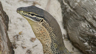 Photograph - Large Monitor Lizard 3 by Gary Crockett
