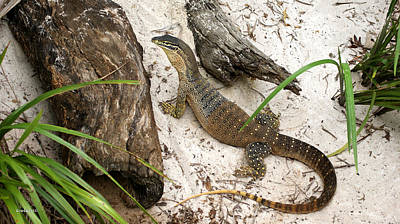 Photograph - Large Monitor Lizard 4 by Gary Crockett