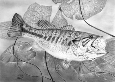 Large Mouth Bass Drawing - Large Mouthed Bass Drawing by James Schultz