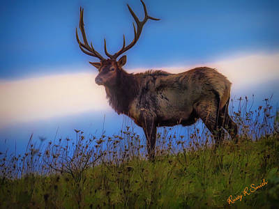 Digital Art - Large Pa. Bull Elk Standing Alone On A Hillside. by Rusty R Smith