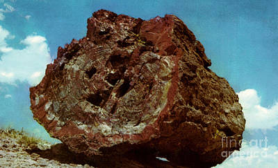 Large Petrified Log  Art Print by Ruth  Housley
