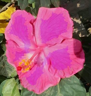 Photograph - Large Pink Hibiscus by Ashish Agarwal