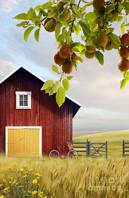 Photograph - Large Red Barn With Bicycle In Field Of Wheat by Sandra Cunningham