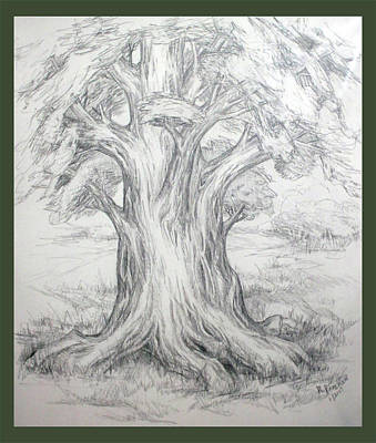 Drawing - Large Shady Tree by Ruth Renshaw