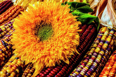 Photograph - Large Sunflower On Indian Corn by Garry Gay