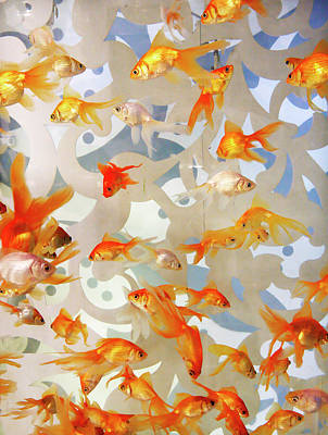 Photograph - Large Tank Of Goldfish by Marilyn Hunt