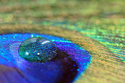 Photograph - Large Water Drop On A Feather by Angela Murdock