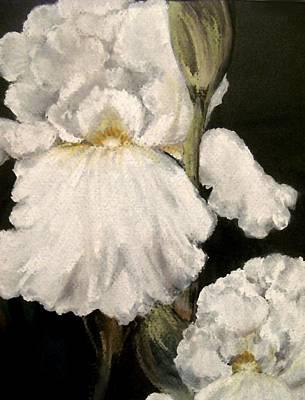 Large White Iris Art Print by Carol Sweetwood