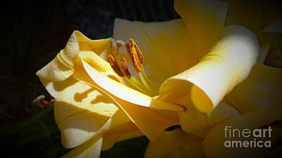 Photograph - Photos Large Yellow Amaryllis Delynn Addams by Delynn Addams