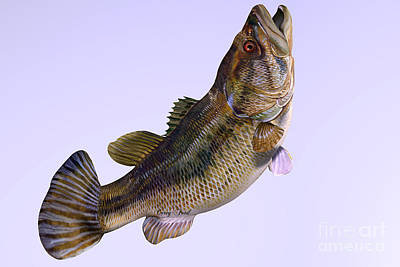 Largemouth Bass Side Profile Art Print by Corey Ford