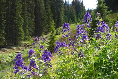 Larkspur Along Trail Ridge Road Art Print