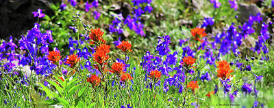Photograph - Larkspur And Paint Brush by Michele Penner