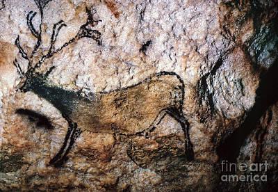 Photograph - Lascaux: Running Deer by Granger