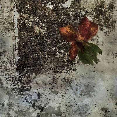 Photograph - Lass Mich Raus by Viggo Mortensen