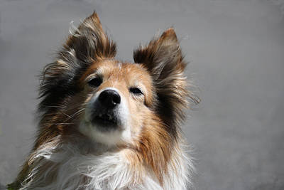 Photograph - Lassie by Mary-Lee Sanders