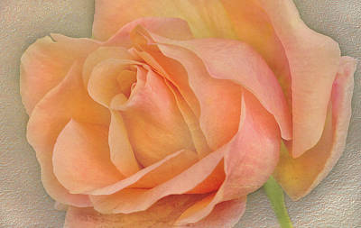 Photograph - Last Autumn Rose by Jacqi Elmslie