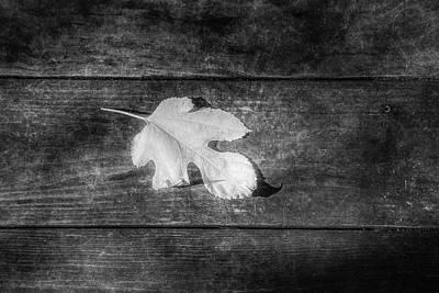 Photograph - Last Bit Of White In Black by Debra and Dave Vanderlaan
