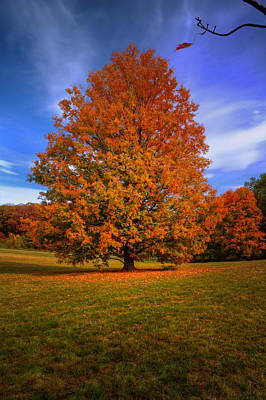 Last Call Of Fall Original