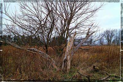 Photograph - Last Days Of November by Scott Kingery