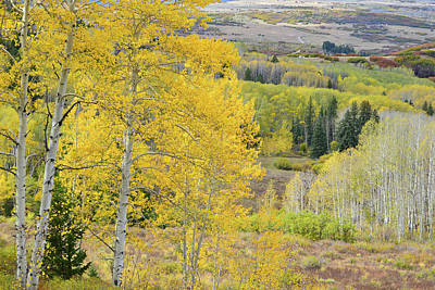 Photograph - Last Dollar Road Aspen Groves by Ray Mathis