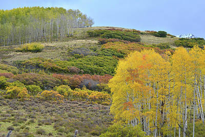 Photograph - Last Dollar Road High Country Fall Colors by Ray Mathis