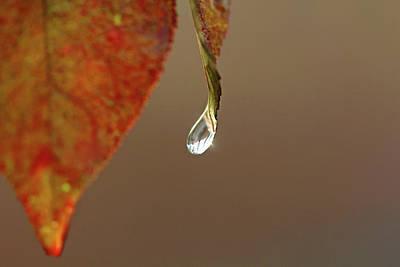 Photograph - Last Drop by Debbie Oppermann