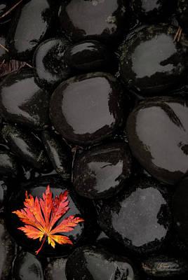 Photograph - Last Fall Leaf by Lori Grimmett