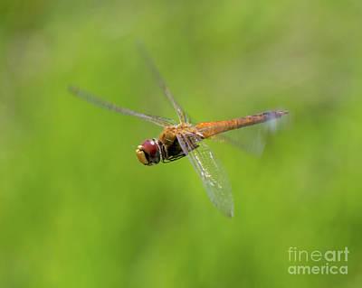 Photograph - Last Flight Of Summer by Liz Masoner