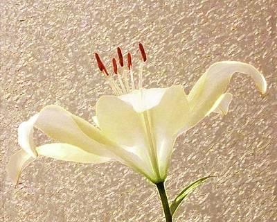 Digital Art - Last Flower To Bloom Accented by Ellen Barron O'Reilly