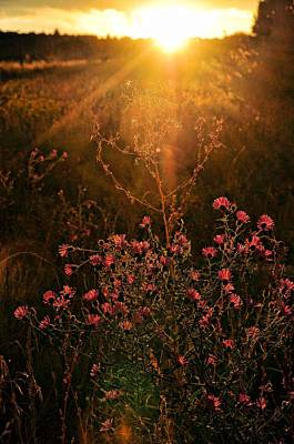 Art Print featuring the photograph Last Glimpse Of Light by Jan Amiss Photography