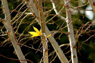 Art Print featuring the photograph Last Leaf by Kume Bryant
