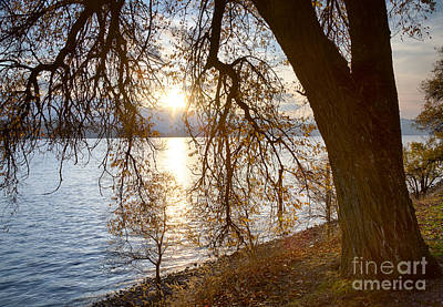 Photograph - Last Leaves by Idaho Scenic Images Linda Lantzy