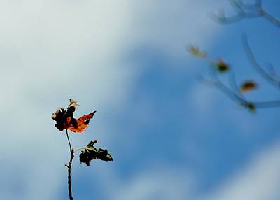Photograph - Last Leaves by JAMART Photography