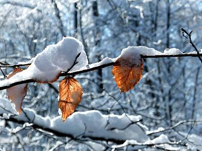 Photograph - Last Leaves by Karen Stahlros