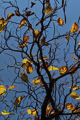 Photograph - Last Leaves Of Autumn by Dave Gordon
